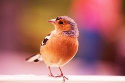 cute tiny bird, background blured