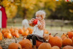 Cute toddler blond girl in fox coat and tail biting a red pumpkin on a pumpkin's field. Copy space