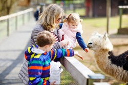 Cute toddler girl, little school kid boy and young mother feeding lama and alpaca on a kids farm. Two children petting animals in zoo. Woman with son, daughter together on family weekend vacations