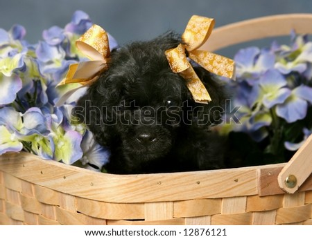 Bangladesh Flower Picture on Cute Toy Poodle Pictures