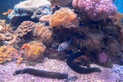 Cute water animals that swim along the amazing coral reefs.