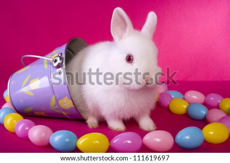 Cute White Baby Rabbits Cute White Baby Easter