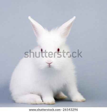 Cute White Baby Rabbits Cute White Baby Rabbit