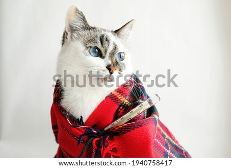 Cute white blue eyes cat wrapped in a warm blanket measures the temperature with a medical thermometer. Home treatment concept. White background Photo stock ©