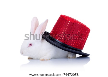 Cute white bunny covered with a red hat, side view