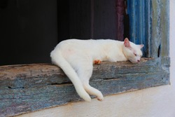 Cute white cat relaxing on a window