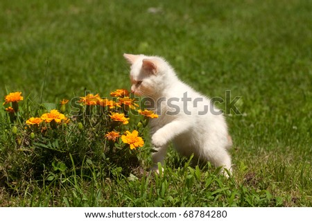 Cute white cat sniffing flowers in a yard