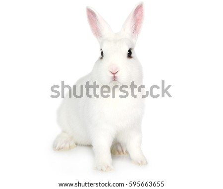 Cute white fluffy Bunny isolated on white background