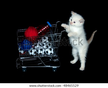 Cute white kitten pushing shopping cart on black background