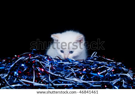 Cute white kitten with red, white, blue streamers for Fourth of July