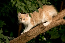 Cute yellow and white feral kitten in a tree