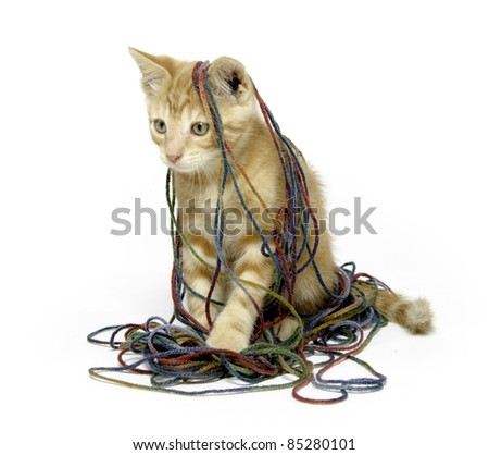 Cute yellow tabby cat with colorful yarn on white background
