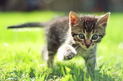 Cute young cat walking on grass