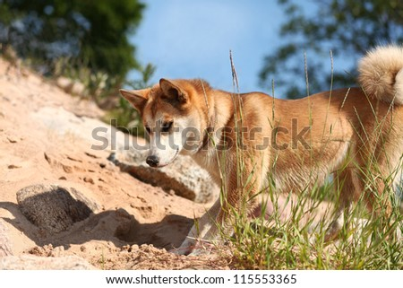 Cute young  dog playing with a shadow on the beach