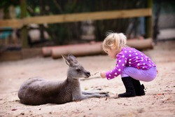 cute young girl and kangaroo in the zoo