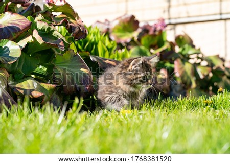 Photo of Cute young kitten making her first steps outside in the garden. Very fluffy young cat enjoying the first amazing summer day in Estonia. Kitten on an adventure. Sunny day. High resolution image