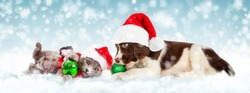 Cute young puppy and kitten together wearing Christmas Santa Claus hat playing with ornaments