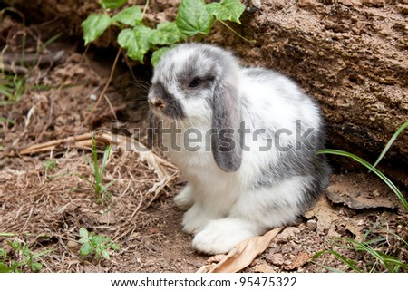 Cute  young  rabbit in  the wild - stock photo