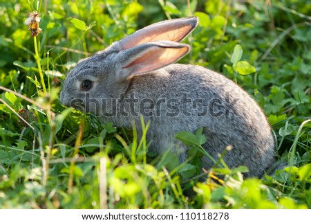 Cute young rabbit on grass - stock photo