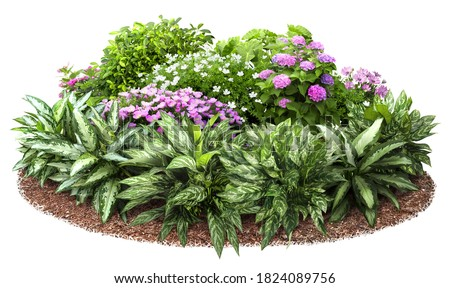 Cutout flower bed. Garden design isolated on white background. Flowering shrub and green plants for landscaping. Decorative hedge. High quality clipping mask. Stock photo ©