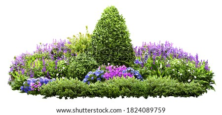 Cutout flower bed. Garden design isolated on white background. Flowering shrub and green plants for landscaping. Decorative hedge. High quality clipping mask.