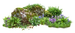 Cutout rock surrounded by flowers. Garden design isolated on white background. Flowering shrub and green plants for landscaping. Decorative shrub and flower bed. High quality clipping path.
