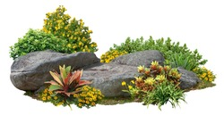 Cutout rock surrounded by flowers. Garden design isolated on white background. Flowering shrub and green plants for landscaping. Decorative shrub and flower bed. High qualit