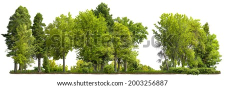 Cutout tree line. Row of green trees and shrubs in summer isolated on white background. Forestscape. High quality clipping mask. Forest and green foliage. Stock photo ©