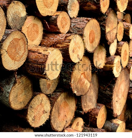 cutted tree stumps texture - stock photo