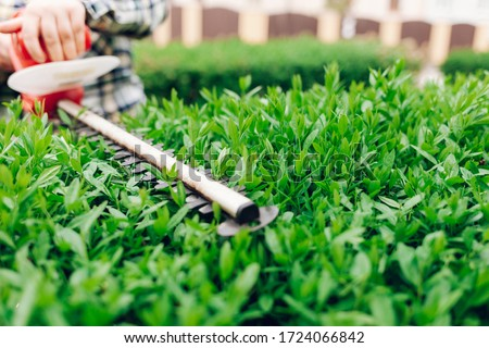 Cutting a shrub with an electric brush cutter ストックフォト ©