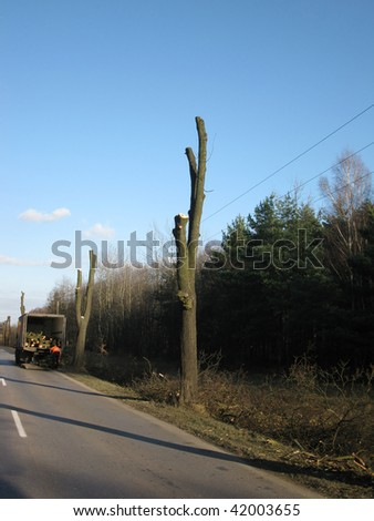 cutting down trees at the roadside and damaging roadways