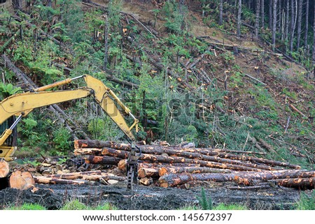 cutting of pine trees for timber on a hillside