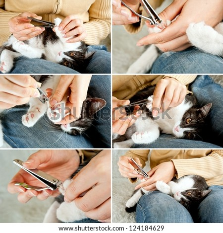 Cutting off domestic cat's claws. Set of photos. Hand holding clippers.