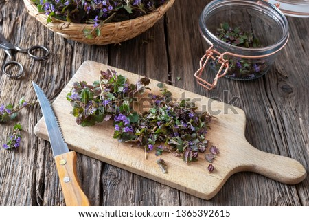 Cutting up blooming ground-ivy twigs to prepare homemade herbal syrup against cough