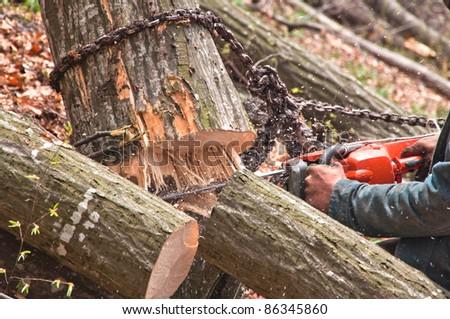 cutting woods , close-up