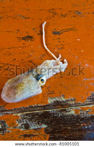 cuttlefish from the andaman sea