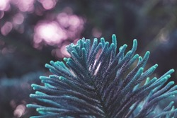 Cyan and pink graphic of a cypress tree leaves. Intentional shallow depth of field.