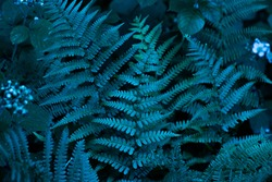 Cyan blue, turquoise colored fern leaves and wild plants background. Dark pattern of enchanted forest flora.