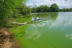 Cyanobacteria or