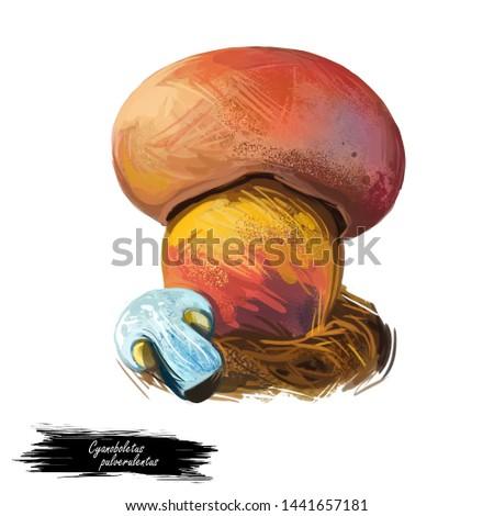 Cyanoboletus pulverulentus ink stain bolete, is an edible bolete edible fungus mushroom isolated. Digital art illustration, natural food, package label or t-shirt print. Autumn harvest fungi on grass