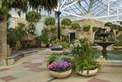 Cyclamen pots in indoor garden room