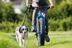 Cycling with dog