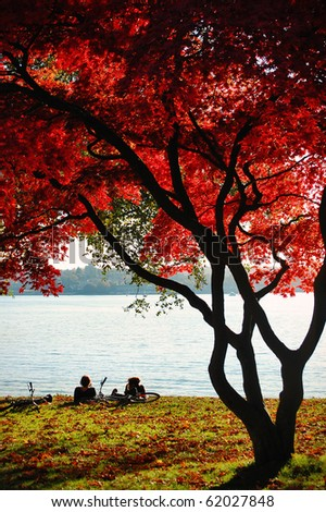 Cyclists rest underneath the amazing red leaves of a tree in Stanley Park, Vancouver.