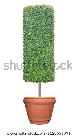 cylinder column shape topiary...