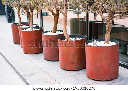 Cylinder rusty steel planter with trees and white stones stands near huge windows. Patio. Garden. Tree pot. Flowers-pot. Pots. Street. City. Sidewalk. Tree-pot. Outdoor. Urban. Flowerpot