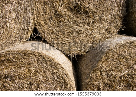 Cylindrical bales of hay against the blue sky. Autumn landscape. Harvested field. Harvesting animal feed. Harvesting.