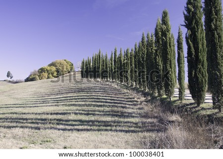 Cypress alley in Tuscany.