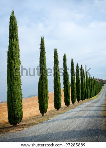 Cypress alley in Tuscany, Italy.
