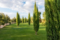 Cypress garden in southern Italy