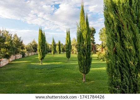 Cypress garden in southern Italy ストックフォト ©